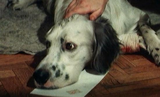 Кадр из фильма «Белый Бим — Чёрное ухо»