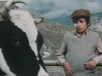 Кадр из фильма «Под знаком однорогой коровы»